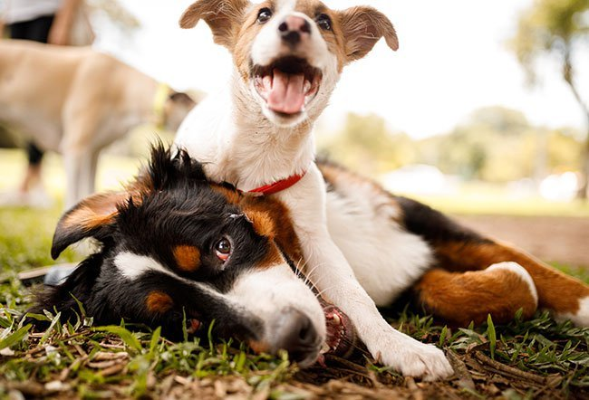 Dogs and puppies are ideal hosts for worms and other parasites.
