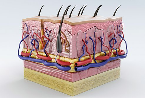 The skin is made up of several layers and each one serves different functions.