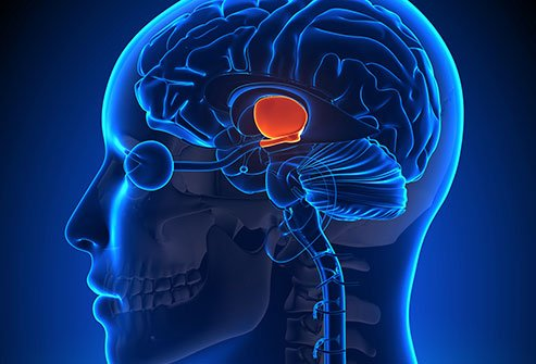 Signs and symptoms of a malfunctioning hypothalamus (hypothalamic dysfunction) usually develop due to various reasons.