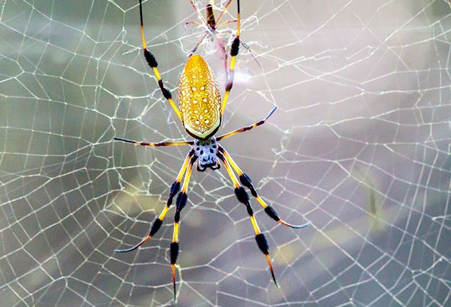 The greatest risks you face with a spider bite are if you ignore symptoms and don't get treatment soon enough.