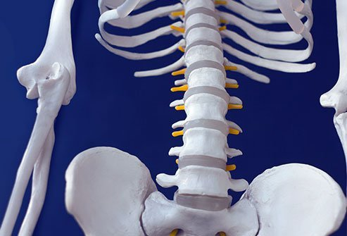 A lumbar facetectomy is the removal of the facet joints from one or more vertebrae in the lower back.