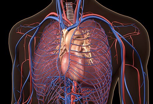 Pulmonary hypertension is elevated pressure in the pulmonary arteries that carry blood from the lungs to the heart.