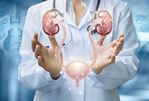 Urologists treat conditions of the male and female urinary tract, and male sex organs.