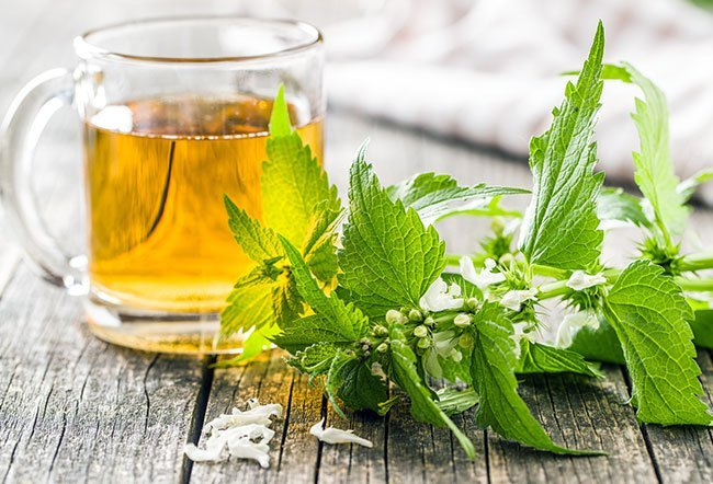 Nettle is a plant best known for the sting of its leaves.