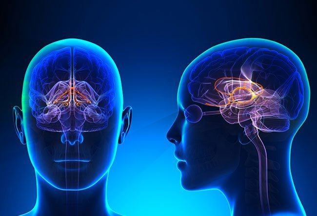 The limbic system is a part of the brain that deals with three major functions