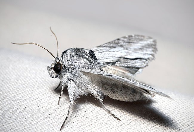 Moths are types of insects with scaly wings.
