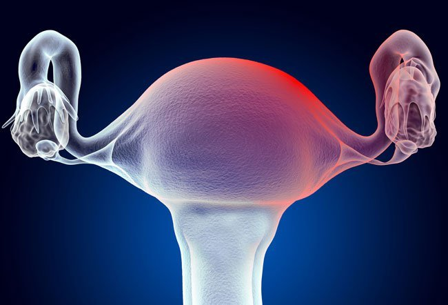 Cervical mucus is fluid secreted by the cervix during different stages of a woman's menstrual cycle. The production of cervical mucus is affected by estrogen levels.