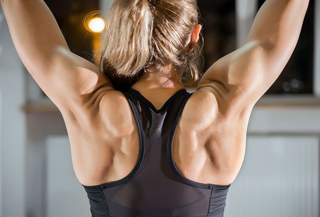 The latissimus dorsi muscle is the largest in the body and is up to 20-40 cm.