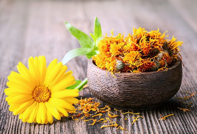 Calendula (marigold) is a genus of an annual plant in the sunflower family.