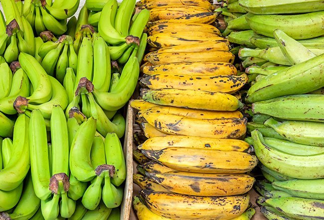 A plantain is generally larger than a banana.