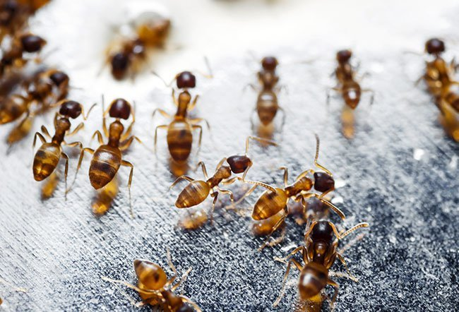 Ants are fascinating and beneficial creatures for our environment.