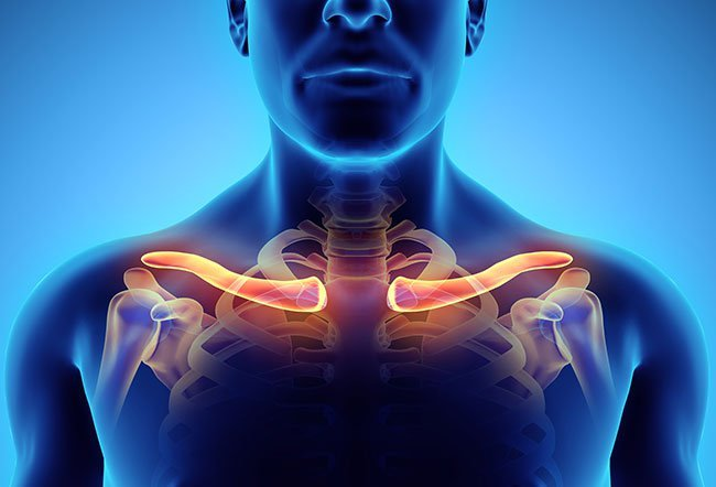 The clavicle, popularly known as the collarbone, is a part of your shoulder.