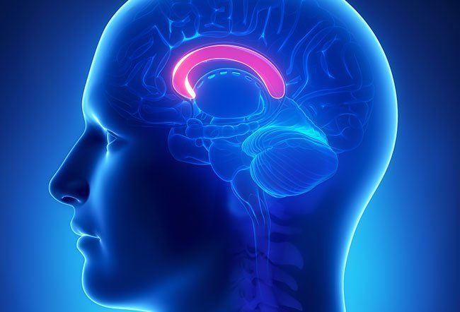 The brain is made up of two sides (hemispheres) known as the right and left cerebral hemispheres