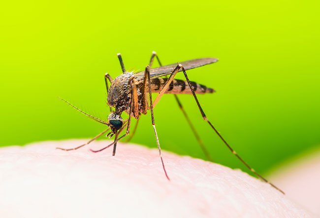 Dengue fever is an illness caused by the dengue virus.