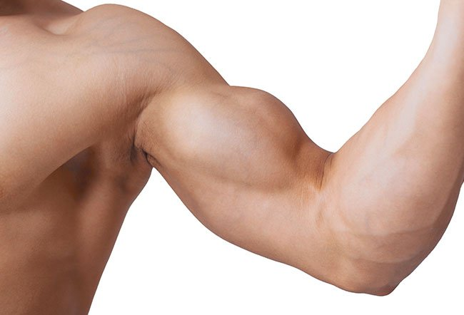 Biceps muscles are any group of muscles that have two points of origin. There are two types of biceps in the human body, the biceps brachii on the front side of the upper arm and the biceps femoris, which pulls the thigh near the trunk.