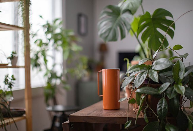 Air-purifying plants are a group of recognized natural house plant varieties used for detoxifying indoor air