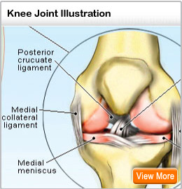 Picture of Knee Joint