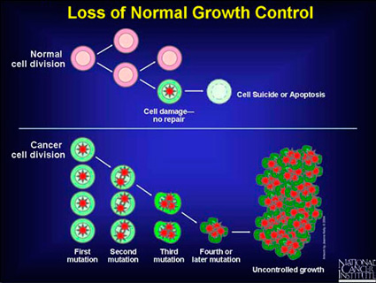 Picture of the growth of cancer cells