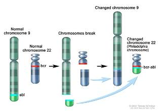 Philadelphia chromosome. A piece of chromosome 9 and a piece of chromosome 22 break off and trade places. The bcr-abl gene is formed on chromosome 22 where the piece of chromosome 9 attaches. The changed chromosome 22 is called the Philadelphia chromosome.