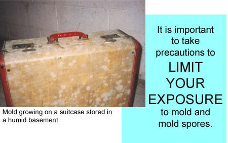 moldy suitcase