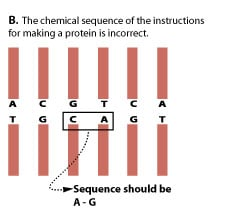 Chemical sequence of the instructions for making a protein is incorrect.