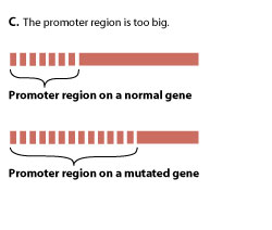 The promoter region is too big.