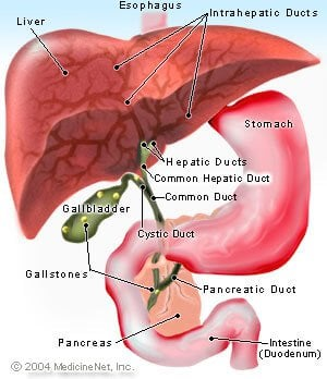 Picture of the upper GI system, gallbladder, liver, and pancreas