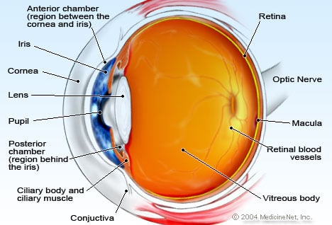 Eye Anatomy Detail Picture Image on MedicineNet.com