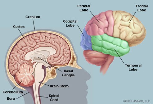 Head Injury (Traumatic Brain Injury) Symptoms & Treatment