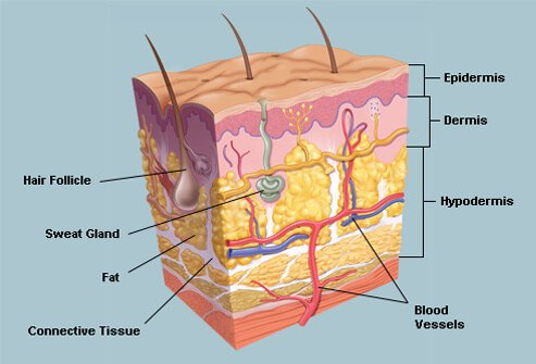Skin picture image on medicinenet picture of skin ccuart Images