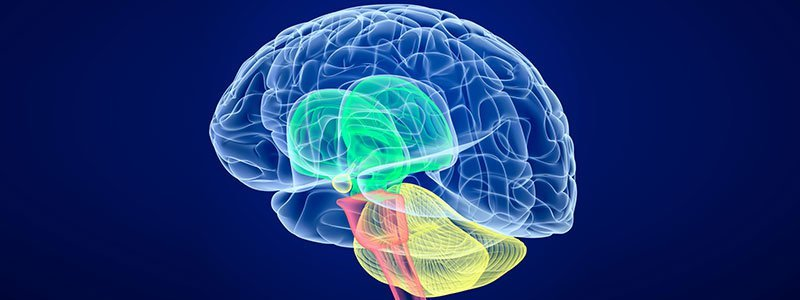 10 Fun Facts About the Human Brain - Take the Quiz!