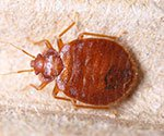 Take the Bed Bugs Quiz