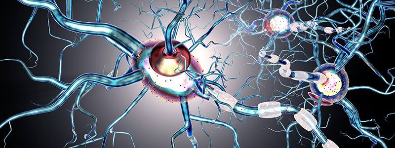 Multiple Sclerosis (MS) Quiz: What is Multiple Sclerosis?