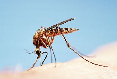 Summer safety facts remind us to take precautions against mosquitoes which can harbor disease.