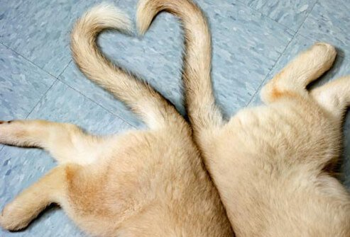 Photo of tails making a heart.