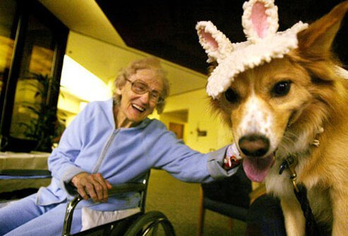 A therapy dog in a halloween costume cheering up a woman in a wheelchair