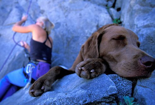 A rock climber and her dog