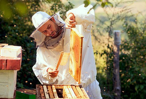Most honey comes from farms where bees pollinate crops like berries, vegetables, fruit trees, and nut trees.