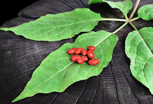 In Chinese medicine, the root of the ginseng plant is a common treatment.