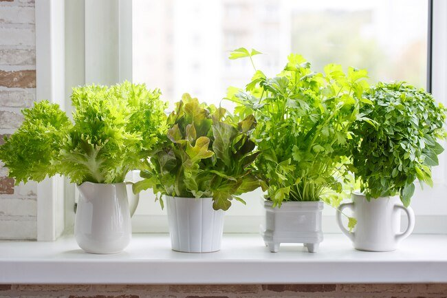 Trim the ends of herbs and keep them in a vase in the fridge covered loosely with plastic to keep them fresh.
