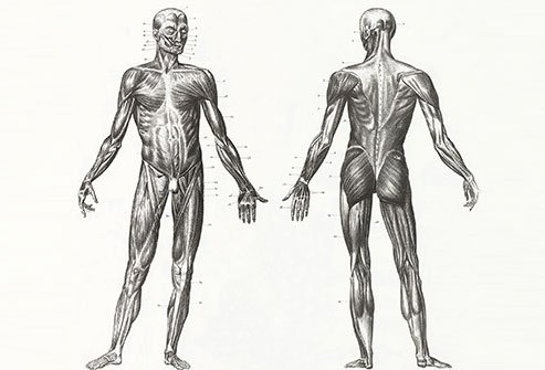 Trigger points are tender areas of muscle that cause pain.