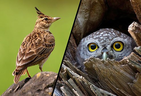 Night owls and morning larks have different circadian rhythms.