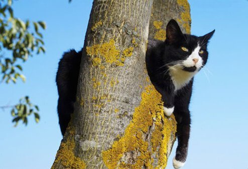 Photo of a cat in a tree.