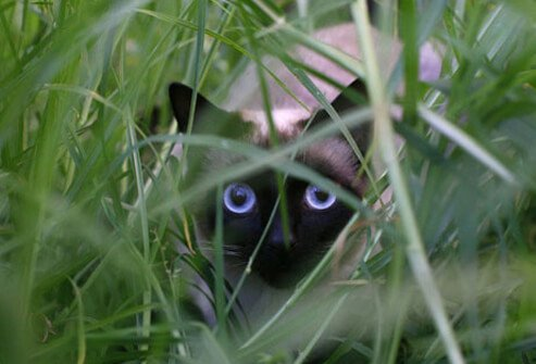 Photo of a cat playing in grass.