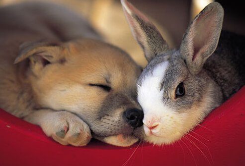Photo of a puppy and bunny.