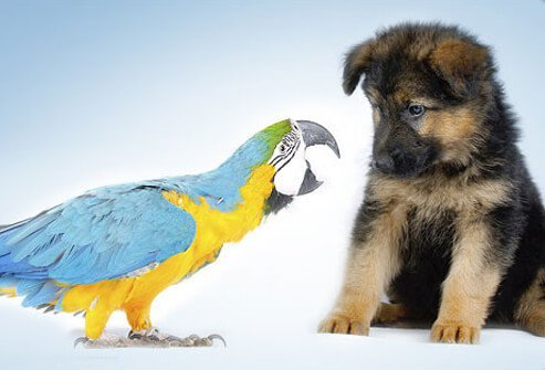 Photo of a parrot and puppy.