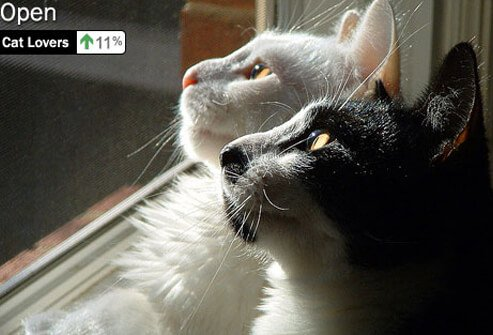 Photo of cats looking out the window.