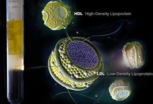 HDL and LDL cholesterol levels.