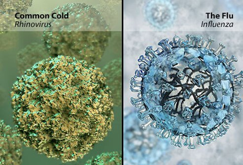 Cold vs. flu viruses, a microscopic view.