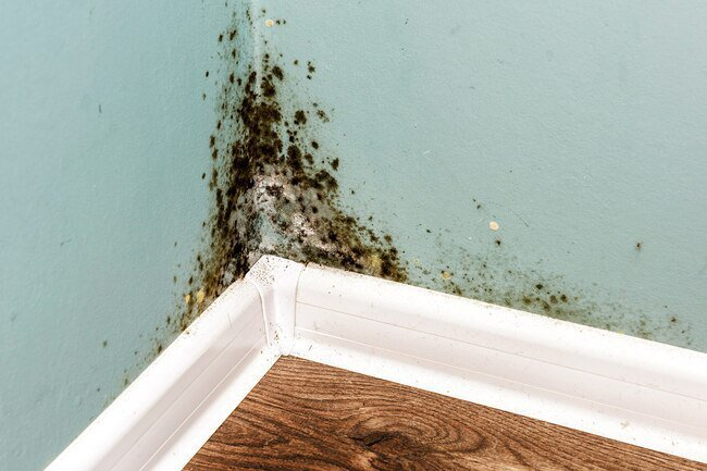 Mold in your house can cause breathing problems, asthma, and other allergies.